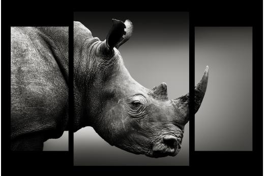 Модульная картина Носорог